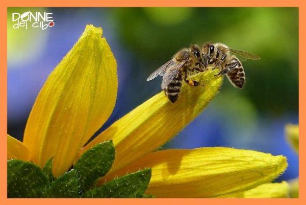 Effetti sull'ecosistema della sparizione delle api